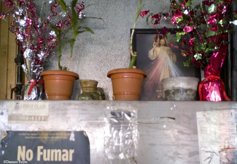Plants & Jesus