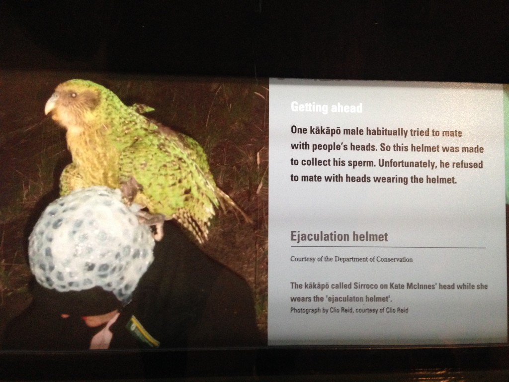 Kakapo, Te Papa, Wellington, NZ