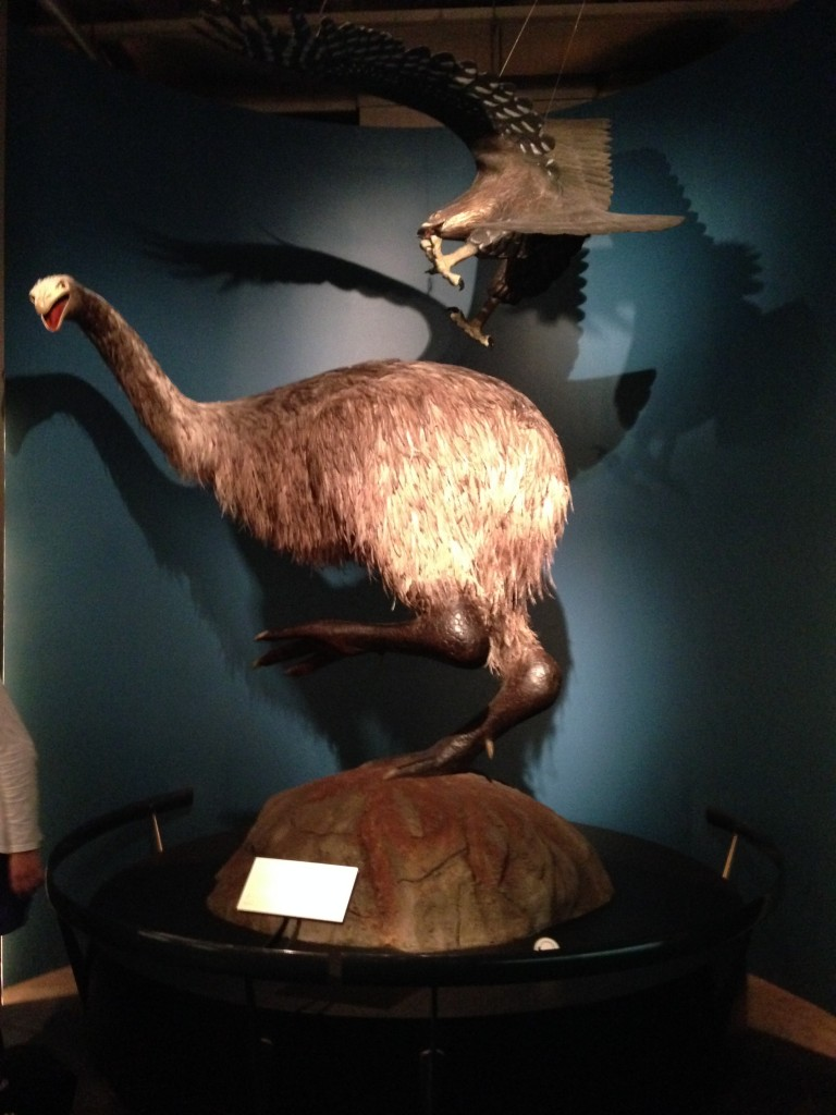 Big Birds, Te Papa, Wellington, NZ
