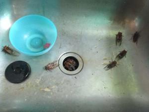 Sink bugs