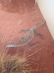Bub the Perentie