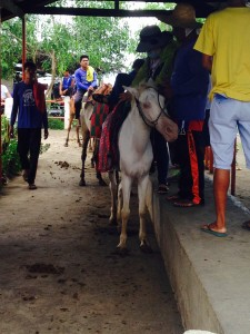 Taal Volcano horse