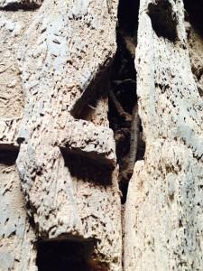 Bones through crack in coffin